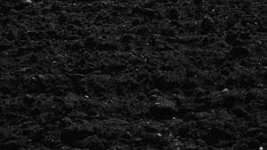 juodžemis Panevėžyje